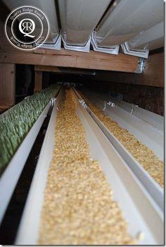 Ridge Fodder System Rain Gutter Fodder System For Chickens - What a great ideaRain Gutter Fodder System For Chickens - What a great idea Fodder System, Hydroponics System, Hydroponic Gardening, Container Gardening, Vegetable Gardening, Mini Farm, Rainwater Harvesting, Farms Living, Urban Farming