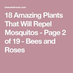 18 Amazing Plants That Will Repel Mosquitos - Page 2 of 19 - Bees and Roses
