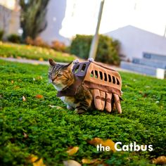 A cosplaying cat as Neko bus from My Neighbour Totoro by Studio Ghibli Costume Chat, Pet Costumes, Animal Costumes, Cosplay Costumes, Costume Ideas, Hayao Miyazaki, Crazy Cat Lady, Crazy Cats, The Bloodhound Gang