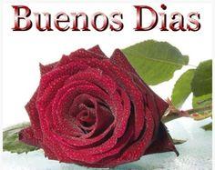 Bonita rosa roja para darte los Buenos Días