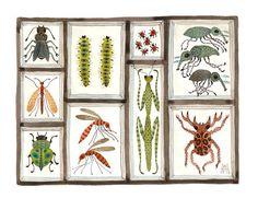 Beetles Weevils and Flies No 14 original watercolor by GollyBard