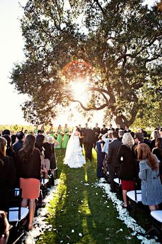This Tree Was Meant To Be At Our Wedding Gainey Vineyard Santa Ynez Ca