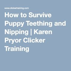 How to Survive Puppy Teething and Nipping | Karen Pryor Clicker Training