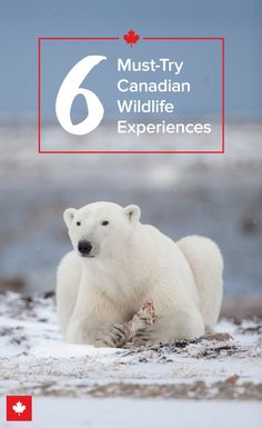laugh out loud. Canada has some of the most unique and extreme wildlife experiences in the world. Vacation Places, Dream Vacations, Vacation Spots, Places To Travel, Travel Destinations, Places To Go, Animals Beautiful, Cute Animals, Beautiful Creatures