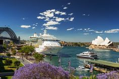 Sydney Jacarandas trees in bloom and a Cruise Ship docked at the Overseas Shipping Terminal at Circular Quay / Photograph by Hamilton Lund Visit Australia, Australia Travel, Land Of Oz, Great Barrier Reef, Sydney Harbour Bridge, Day Tours, Beautiful Beaches, Bloom, City