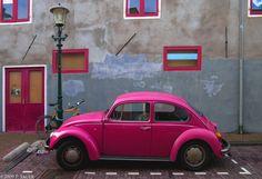 pink beetle  (via umla)