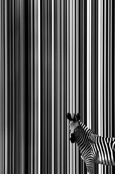 Stripy horse...
