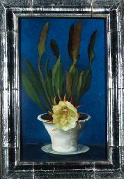 Flowering cactus  Gluck (Hannah Gluckstein) (1895-1976)  Flowering cactus  signed and dated 'GLUCK/1932' (lower left)  oil on canvas, in a glass frame constructed by the artist  27 x 17 in. (68.5 x 43.1 cm.)