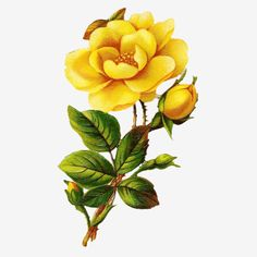 Big Flowers, Flowers In Hair, Beautiful Flowers, Botanical Flowers, Botanical Prints, Frog Design, Arte Floral, Colorful Drawings, Paper Roses