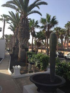Caleta de fuste. Fuerteventura