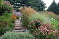Coneflowers, grasses, catmint and Joe Pye weed provide ample food for birds and pollinators in this naturalistic and colorful garden. Design by Fernhill Landscapes of Strasburg, PA.