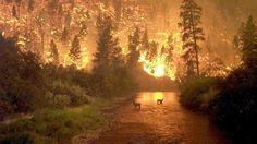 Incendio in Montana    Il fuoco divampa in una foresta a nord di Saula a East Fork, nei pressi di Bitterroot River Bridge.   (Credits: John McGolgan)