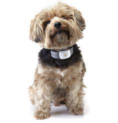 GPS Dog Collar by Tagg via wsj: Keep track of your buddy. #Dog_Collar #GPS_Dog_Collar #Tagg #WSJ