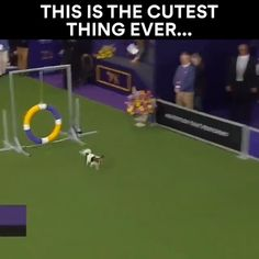 i can officially die happy after watching this - Cutest Baby Animals Funny Dog Videos, Funny Animal Memes, Cute Funny Animals, Cute Baby Animals, Funny Dogs, Animals And Pets, Funny Kittens, Cute Puppies, Cute Dogs