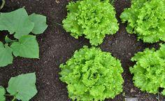 Como fazer uma horta no seu jardim