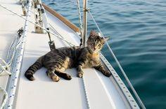 Ils lâchent leur emploi et vendent tout pour voyager à travers le monde avec leur chat