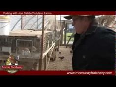 ▶ Murray McMurray Hatchery visits Joel Salatin and Polyface Farms - YouTube