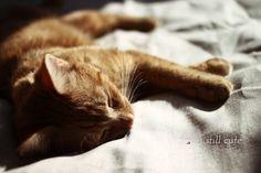 he sleeps on the things i need to work Peter Pan, Kitten, Sleep, Cats, Animals, Cute Kittens, Kitty, Gatos, Animales