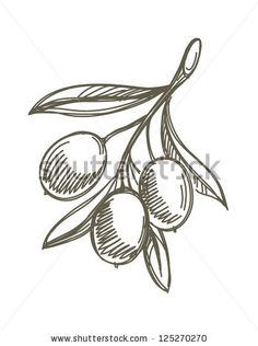 Find olive branch vector stock images in HD and millions of other royalty-free stock photos, illustrations and vectors in the Shutterstock collection. Illustration Sketches, Illustrations And Posters, Olive Branch Tattoo, Branch Vector, Botanical Line Drawing, Tree Wall Murals, Olive Oil Bottles, Leaf Images, Leaf Drawing