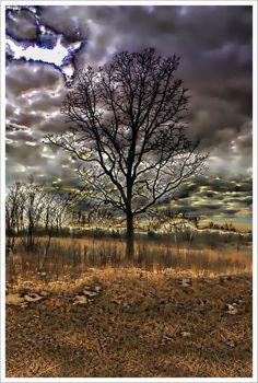 "Photo ""surreal"" by douglasanderson"