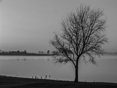 "Saatchi Art Artist johann kruger; Photography, ""Lone Tree"" #art Lone Tree, Tree Photography, Tree Art, Saatchi Art, Landscapes, African, Explore, Sunset, Black And White"