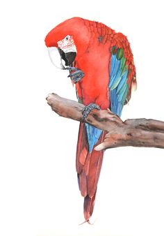 Scarlet Macaw Print of watercolor painting SM0615  by LouiseDeMasi