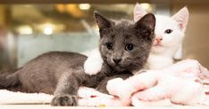 Caregivers and staff at the ASPCA Kitten Nursery celebrated an exciting milestone this week: Since the nursery opened in May, 1,000 kittens that have come through the facility to receive specialized care—many of whom have already been adopted.