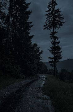 Photo August 10 2019 at There is no Outside-Text Dark Green Aesthetic, Night Aesthetic, Nature Aesthetic, Book Aesthetic, Aesthetic Pictures, Slytherin Aesthetic, Dark Paradise, Dark Photography, Dark Wallpaper