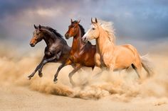Group of horse – Domestic horses have a lifespan of around 25 years. salvajes My Horses New Tab Horse Galloping, Horse Anatomy, Horse Wallpaper, Desenhos Harry Potter, Most Beautiful Horses, Running Horses, Horse Drawings, Mundo Animal, Horse Pictures