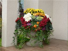 colorful fall urns filled with ornamental peppers, mums, fall cabbages & ivy.