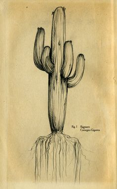 Would make for a lovely cactus tattoo. Personally, i wish a punk-cactus tattoo…