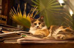 חתול מטבחון    Kitchen Cat