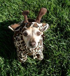 Looks just like my little Daisy! :)