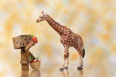 Danbo feeding a giraffe