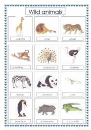 identify wild animals kids learning about science nature pinterest wild animals. Black Bedroom Furniture Sets. Home Design Ideas