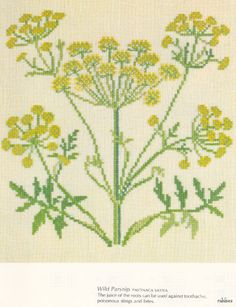70 best herbs berries flowers images on pinterest cross stitch gallery 6 medicinal plants mosca mightylinksfo