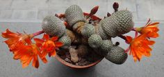 Planting Bulbs, Flora, Succulents, Photo And Video, Group, Collection, Cactus Plants, Gardens, Plants