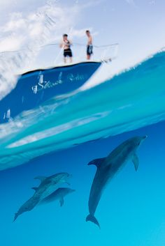 Through a Dolphin's eyes