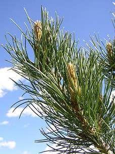 Ask.com Herbs, Plants, Herb, Plant, Planets, Medicinal Plants