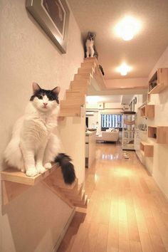 Cat Care Secrets Straight From The Experts – Pets, Dogs, Cats Caring Tips and Pictures Cat Walkway, Deco Cafe, Cat Wall Shelves, Cat Stairs, Cat House Diy, Diy Cat Tree, Cat Run, Cat Playground, Animal Room