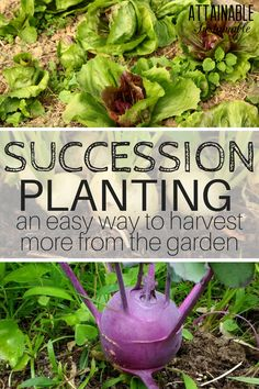 Extend your harvest season by utilizing the succession planting method in your vegetable garden. It's an easy way to make your garden work harder.