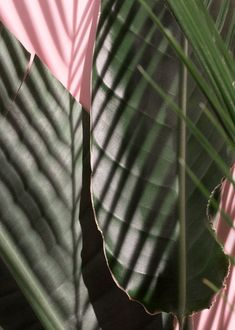 Festival Vibes – Die Los Angeles Atelier Kollektion von & Other Stories - Journelles Tropical Leaves, Tropical Plants, Wallpaper Rosa, Plant Wallpaper, Flamingo Wallpaper, Screen Wallpaper, Plants Are Friends, Tropical Vibes, Jolie Photo