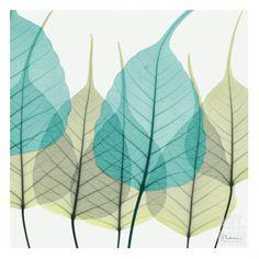 Bodhi Tree • Albert Koetsier