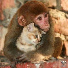 Monkeycat