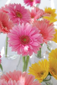 Gerbera daisies are the floral version of a smile.