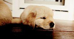 puppypu:   More Dog Gif here - Puppies Galore