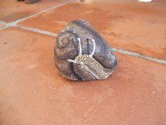 caracol / snail