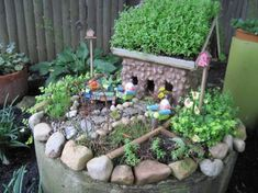 Experimenting with Fairy house rooftop plants