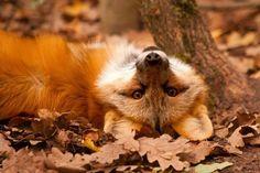 9. Осень как лиса: рыжая, игривая, мягкая и теплая
