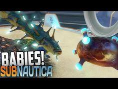 Subnautica - EGG HATCHING BABIES, Shocker, BoneShark, Gasopod Eggs (Gameplay)